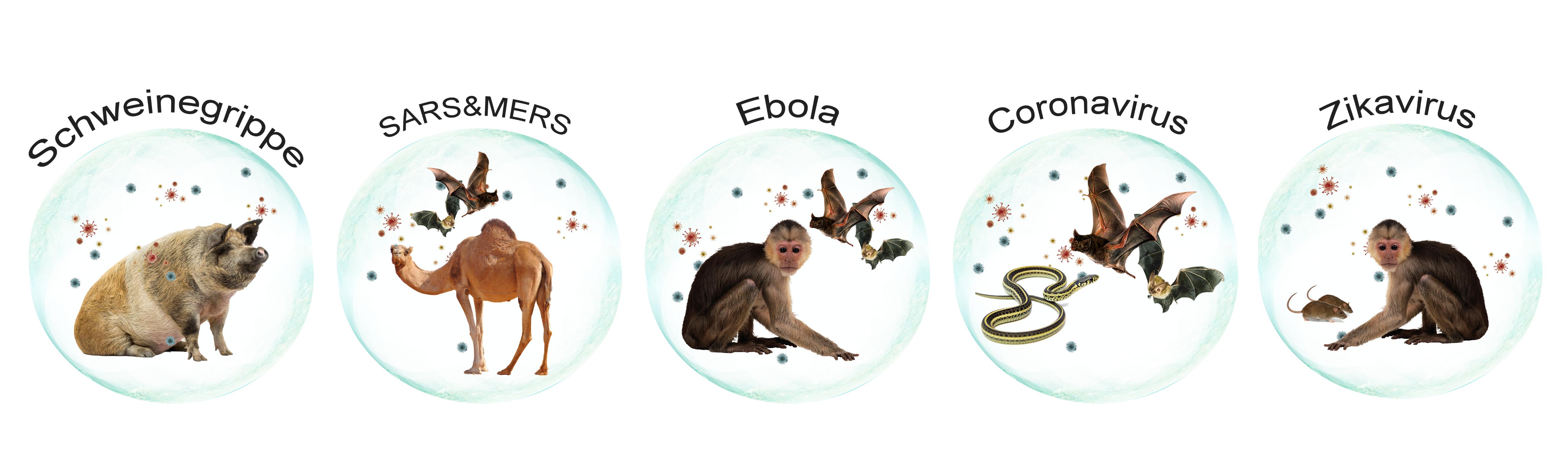 Schweinegrippe, SARS, MERS, Ebola, Zikavirus, Corona - Tieren